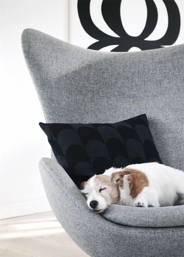 Via Riazzoli   Arne Jacobsen Egg Chair   Kuddar Cushion   Dog