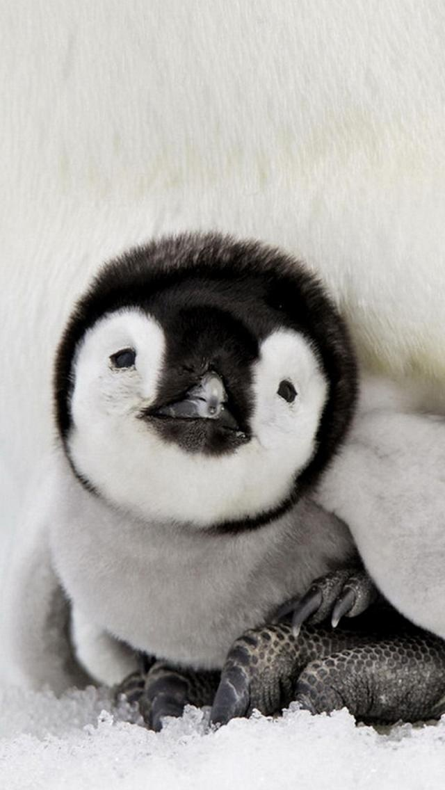 Animals Birds Small Penguin