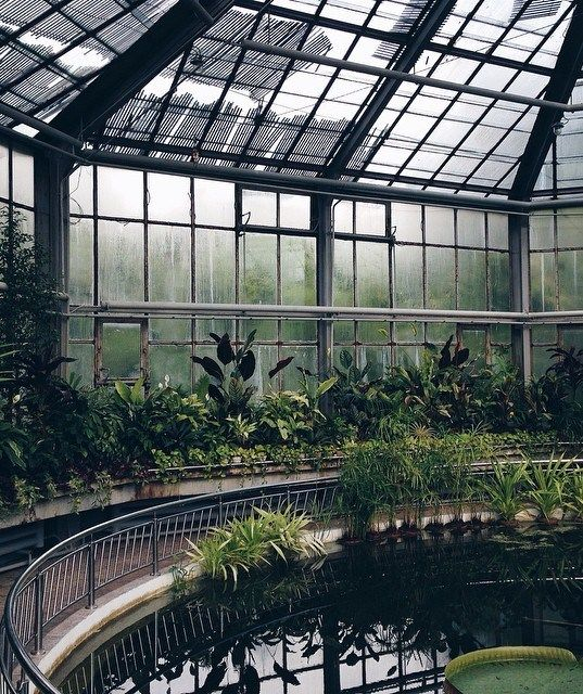 I love the idea of having a water feature in the conservatory - tiny pond or something...