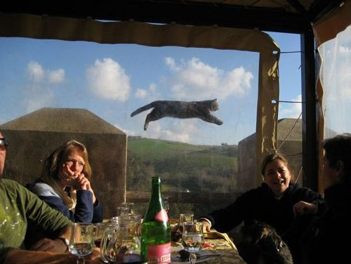 Super cat: Photos, Cats, Picture, Animals, Photo Bombs, Funny Animal, Flying Cat, Cat Photobomb