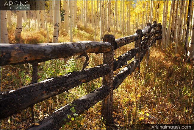 maybe some log fencingFence Photography, Ideas, Logs Fence, Aspen Grove, Log Fence, Art, Travel Photography, Gardens Growing