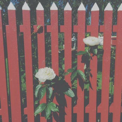 Blommor i fönstret: Fredag