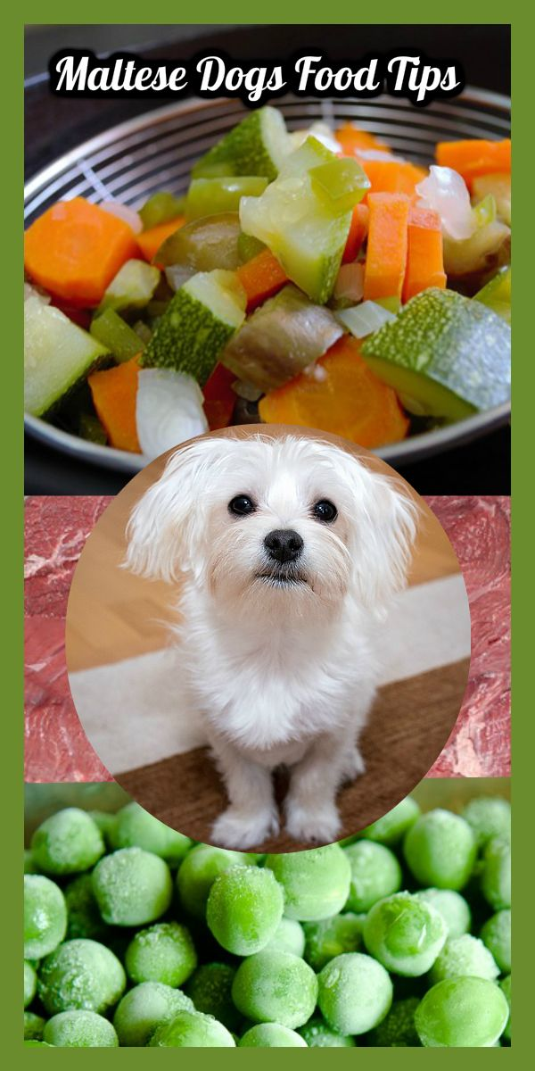 The Best Dog Food for Maltese Dog food recipes, Homemade