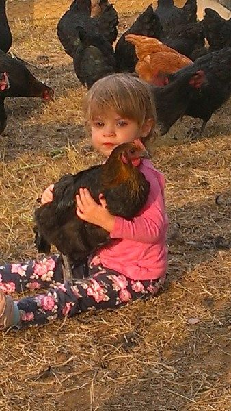 Cuddling an Australorp cross New Hampshire Chicken at Yummy Gardens Melbourne