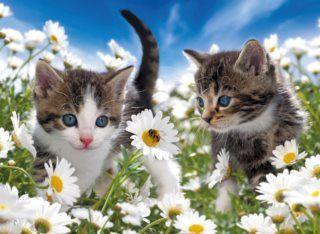 Dětské puzzle RAVENSBURGER 100 dílků - Koťata mezi kopretinami XXL