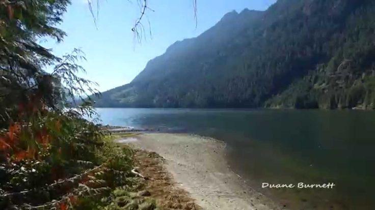 Salmon Spawning Narrows Inlet Sechelt Sunshine Coast BC - YouTube