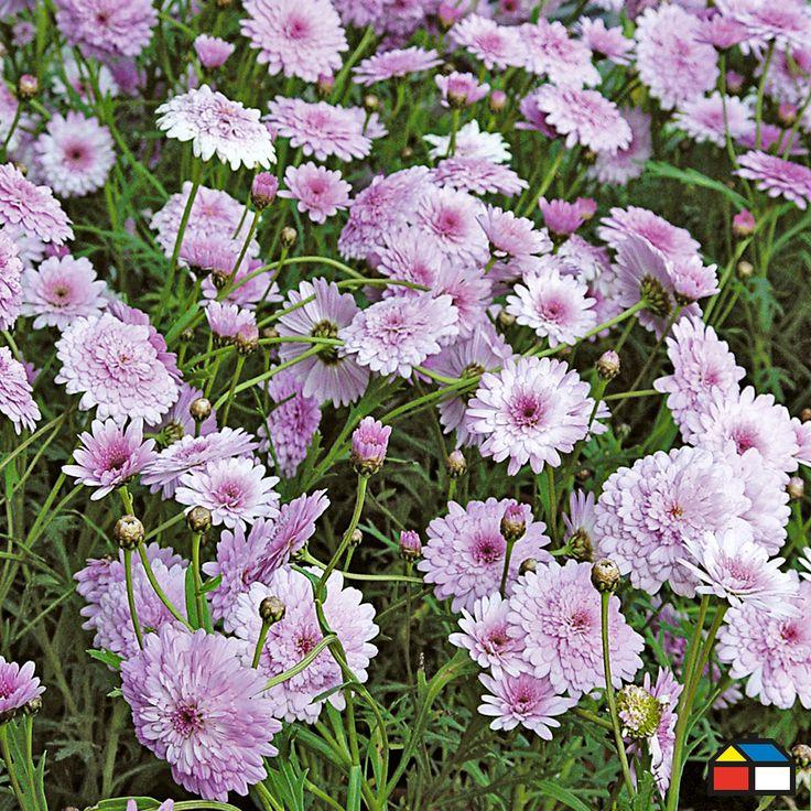 #Airelibre #Plantas #Decoracion #Outdoor #Garden #Plants #Tips #Decor