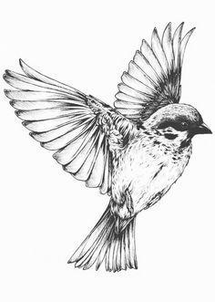 nightingale in flight - Google Search