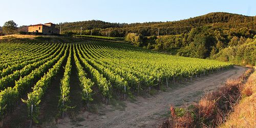 Panoramica sui Vigneti di Pomino - Marchesi de' Frescobaldi  #TuscanyAgriturismoGiratola