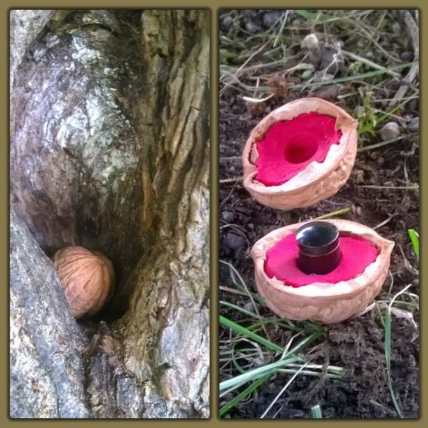 Indice dans une coquille de noix.