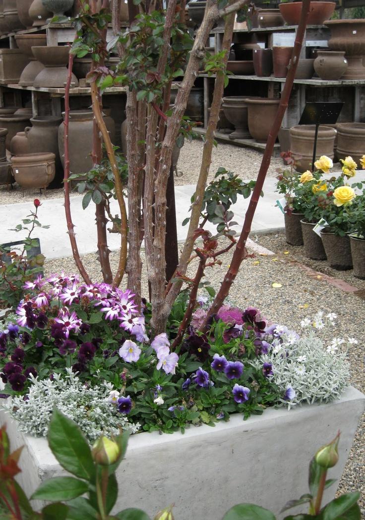 Rogers Garden, Newport Beach, CA | Garden Drought Resitant Plants |  Pinterest | Сады, Пляжи и Ньюпорт бич