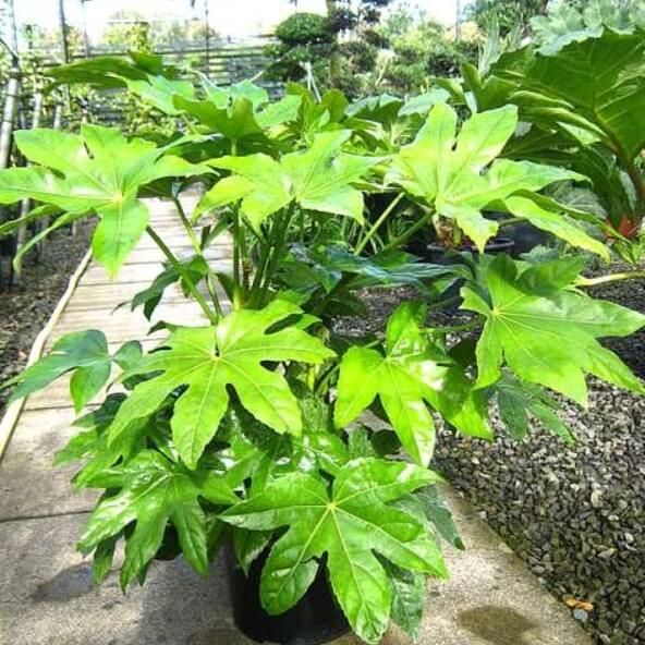 34efec5ba86dc3db97c1e1e3fceae300 - Is Castor Oil Safe For Vegetable Gardens