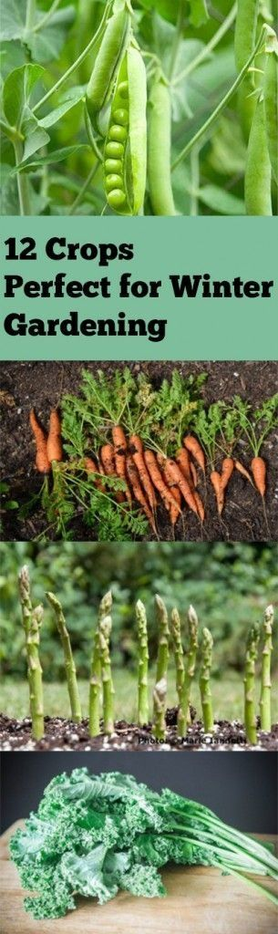 12 Crops Perfect for Winter Gardening