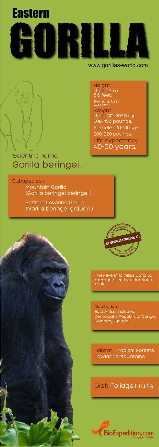 50 best fun rainforest facts images on pinterest animals