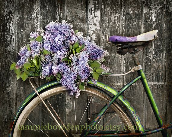 Lilac Bicycle - Original Photograph 8x10 - Rustic Distressed Decor Shabby Chic Cottage Home Bike Green Purple Lavendar Flowers on Etsy, $28.00