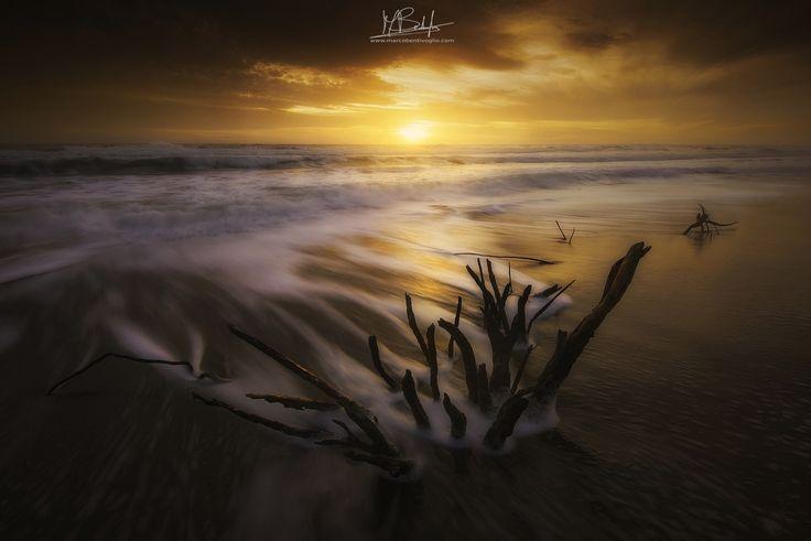 """""""Between the Branches"""" - Foto di domenica scorsa sulla spiaggia di Marina di Alberese.. Non mi capita spesso, ma stavolta devo dire di essere particolarmente soddisfatto di questa foto perchè, al di la dell'aspetto meramente tecnico, me la sono proprio goduta per come è nata, passeggiando in spiaggia con la mia famiglia, in uno dei luoghi più selvaggi e rappresentativi della mia maremma....e spero che renda un minimo anche a voi, la magia ed il fascino di questo posto..."""