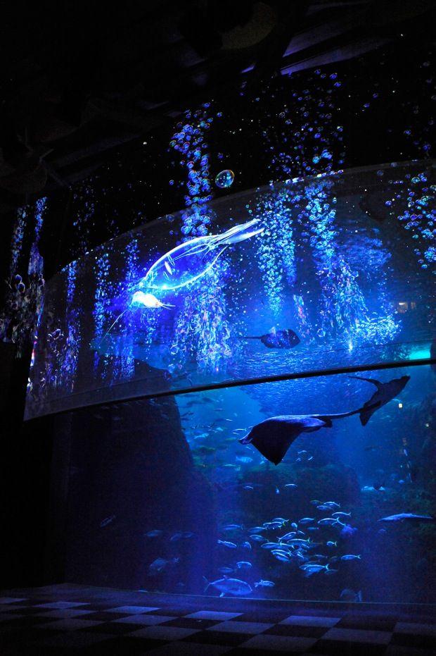 新江ノ島水族館の夏の夜はプロジェクションマッピング!大人向けナイトアクアリウムに変身