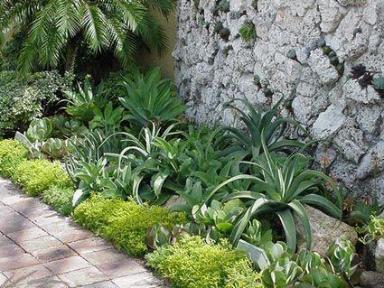 17 Best Ideas About Succulent Landscaping On Pinterest Drought Tolerant Landscape Succulents
