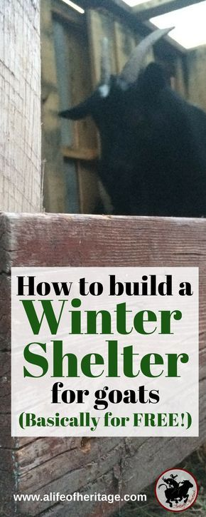 A simple and effective DIY pallet goat shelter that is large enough to hold more than two or three goats. It will keep off the rain, snow and cold! Goats | Goat care | Goat Shelter | Pallet Goat House | DIY Pallet Shelter