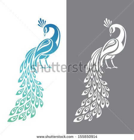Vector illustration of peacock in color and monochrome ...
