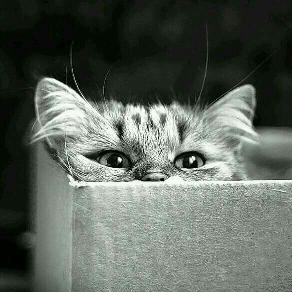 I have always loved this photo of the cat peeking out over the box's edge.  It's too cute not to share!  ~Kathy :) <3