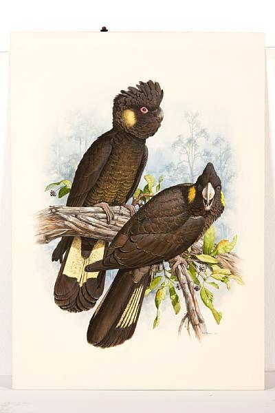 Cockatoos - William T. Cooper