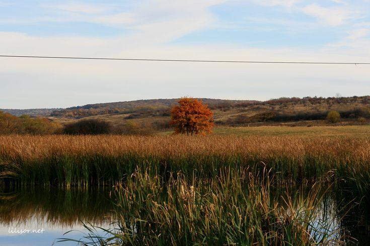 stufaris pe lacul paleu