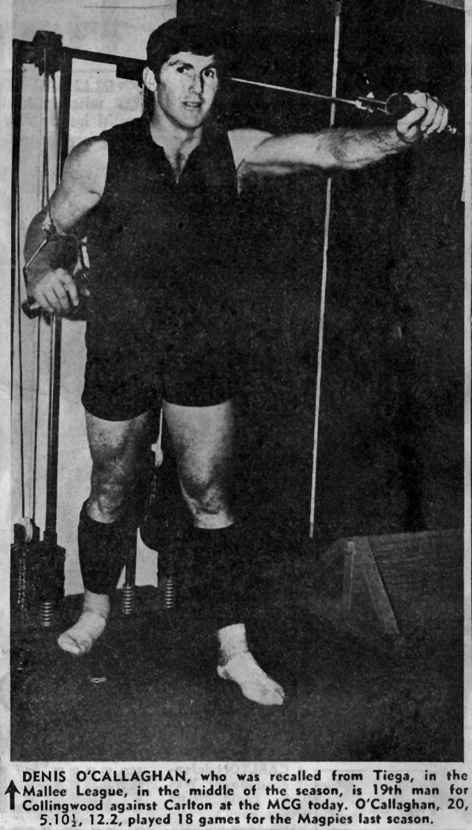 Denis O'Callaghan, Collingwood Newspaper Clipping