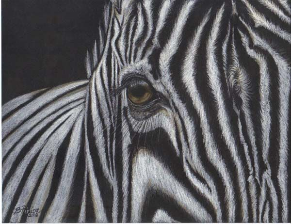 White Charcoal On Black Paper | White charcoal and pastel pencils on black paper.