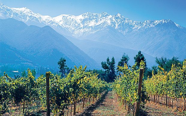 Chile's Maule wine-growing region, the epicentre of a huge earthquake a year   ago, is picking up the pieces, says Carolyn McCarthy.