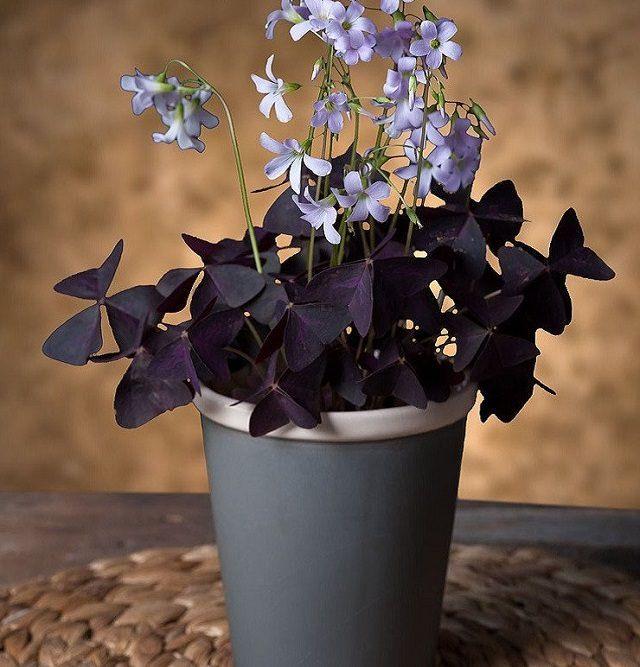 Best 25 indoor flower pots ideas on pinterest potted for Small indoor flowering plants