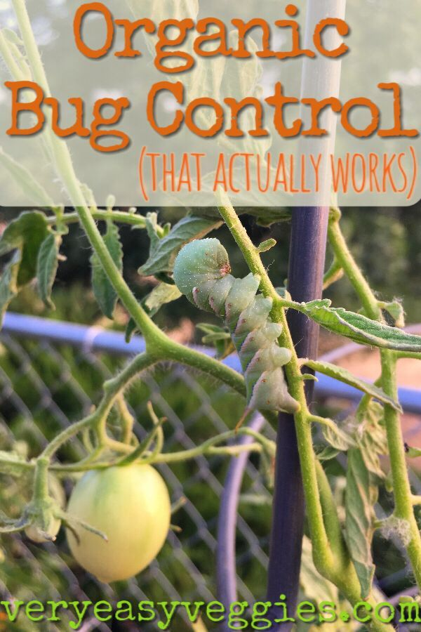 Organic Bug Control That Really Works Organic Insecticide Organic Gardening Pest Control Garden Pests
