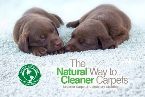 Our natural cleaning solution is safe for pets! No harsh chemicals to hurt their paws.