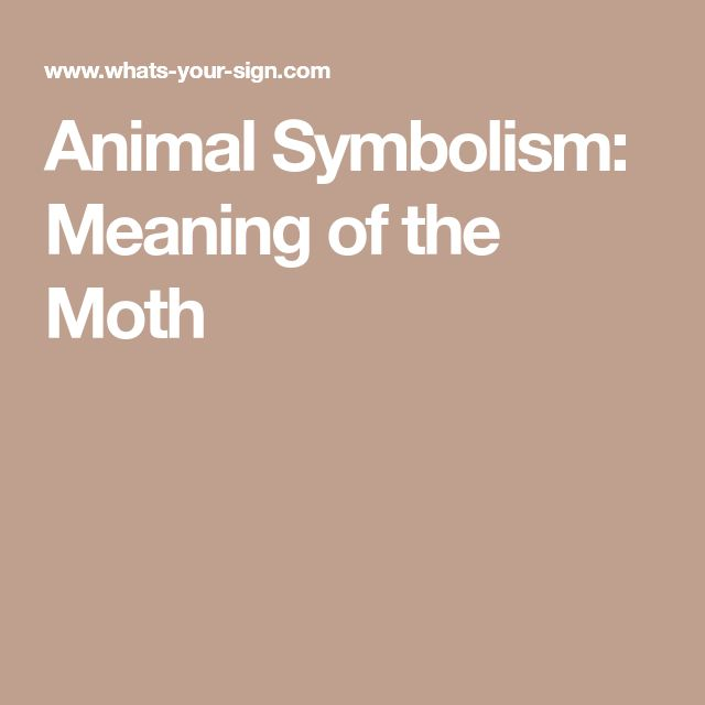 Animal Symbolism: Meaning of the Moth