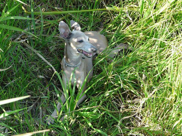 W trawie