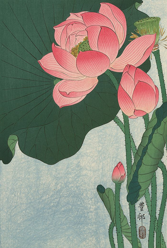 KOSON Japanese Woodblock Print FLOWERING LOTUS 1930s HOSON