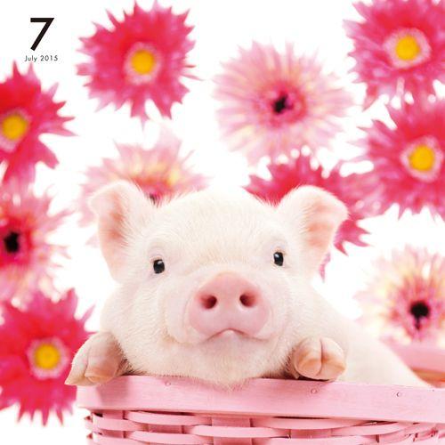 THE PIG PINK | OTHER | Artlist Collection CALENDAR 2015