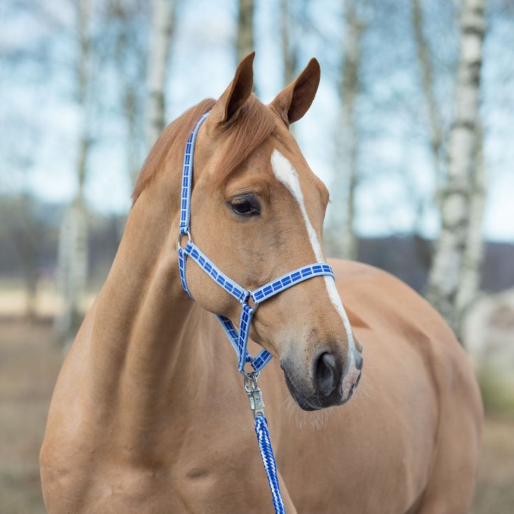 17 Best Images About Lovely Horse Gadgets On Pinterest
