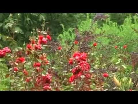 Gradina Botanica Bucuresti Gradina Botanica Bucuresti  #GradinaBotanica #GradinaBotanicaBucuresti #CartierulCotroceni #Cotroceni  #ghid #urban #circuiteturistice www.cotroceni.ro