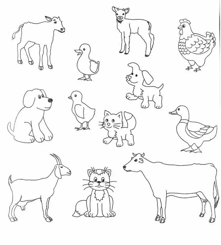 Тесты животные картинки для детей