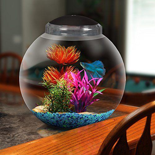 139 best betta fish tanks images on pinterest aquariums for Small betta fish tank