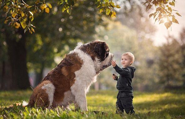 Μεγάλα σκυλιά φωτογραφίζονται με τους μικρούς ιδιοκτήτες τους!