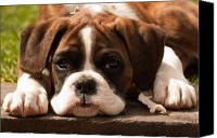 Boxer puppies are like nothing else :-)