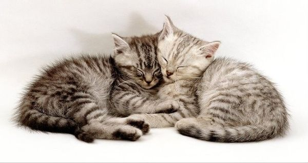 35 Pictures of Cat Hugs