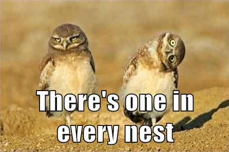 LoL by: Ryan                        Tagged:   Owl ,  funny ,  derp   Share on Facebook