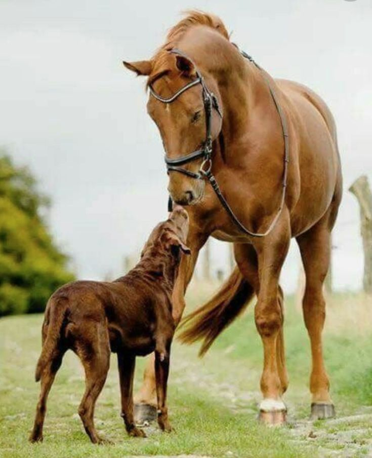 Canine- Equine Dopplegangers: 37 Horses that Have Matching Dogs! – Amateur Equestrian