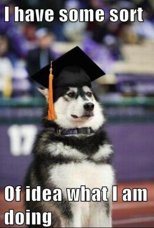 : Laughing, Ideas, High Schools Graduation, Life, Dogs, The Graduation, Colleges Graduation, Funny Animal, Moon Moon