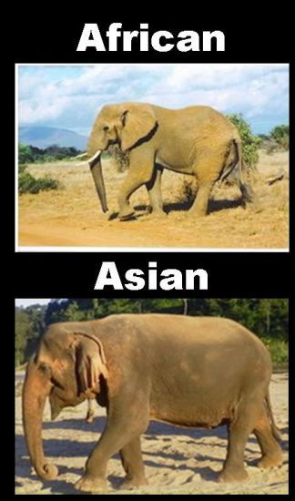 Like most things.. I've got the Asian persuasion.  All elephants are amazing, but the Asian species is so sweet! Look at that face!