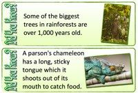 Rainforest Did You Know? Posters