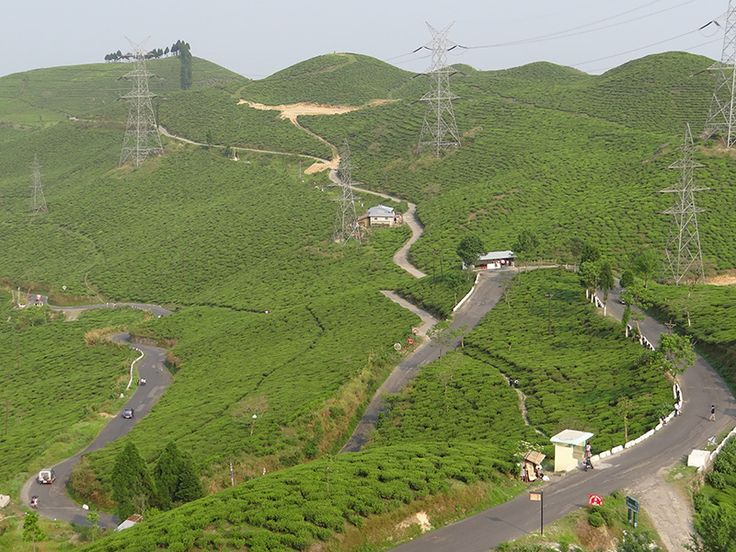 Darjeeling Tea Plantation - West Bengal, India